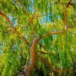 Colour-of-Life-Yanchep-National-Park-Perth-YPV2.2-V1-TH1