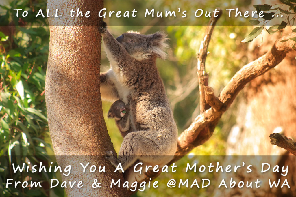Koala and Joey image wishing all the Great Mums out there a Happy Mothers Day
