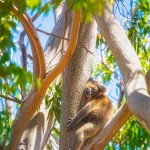 Love-My-Tree-Yanchep-National-Park-Perth-YPW2.3-V1-TV1
