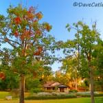 Park-Office-Yanchep-National-Park-Perth-YPV1.11-V1-TH1