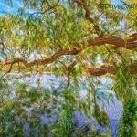 Path-of-Life-Yanchep-National-Park-Perth-YPV2.3-V1-TH1