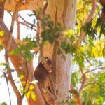 Sleepy-Head-Yanchep-National-Park-Perth-YPW2.6-V1-TV1