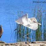 Spoonbill-Yanchep-National-Park-Perth-YPW1.30-V1-TH1