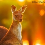 Sunset-Joey-Yanchep-National-Park-Perth-YPW2.9-V1-