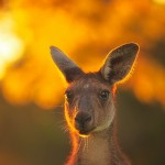 The-Look-Yanchep-National-Park-Perth-YPW2.8-V1-TV1