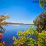 Through-the-Trees-Yanchep-National-Park-Perth-YPV2.1-V1-TH1