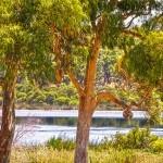 Wagardu-Lake-Yanchep-National-Park-Perth-YPV1.14-V2-TH1